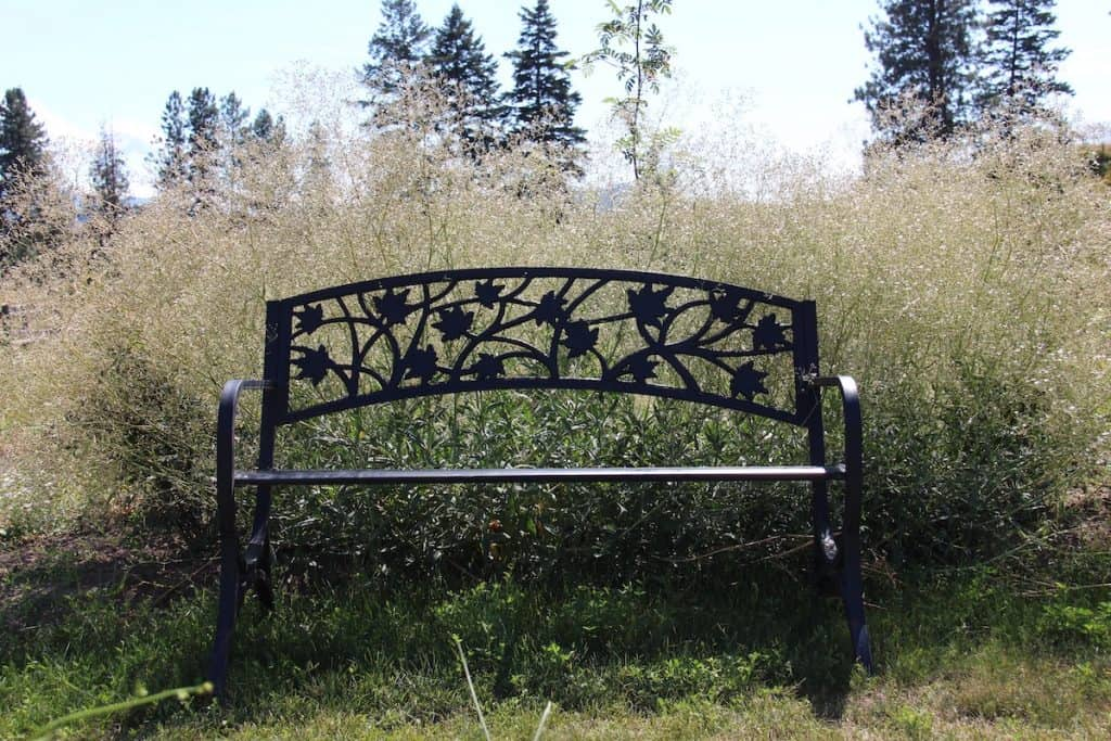 Bench in an ethereal flower bed