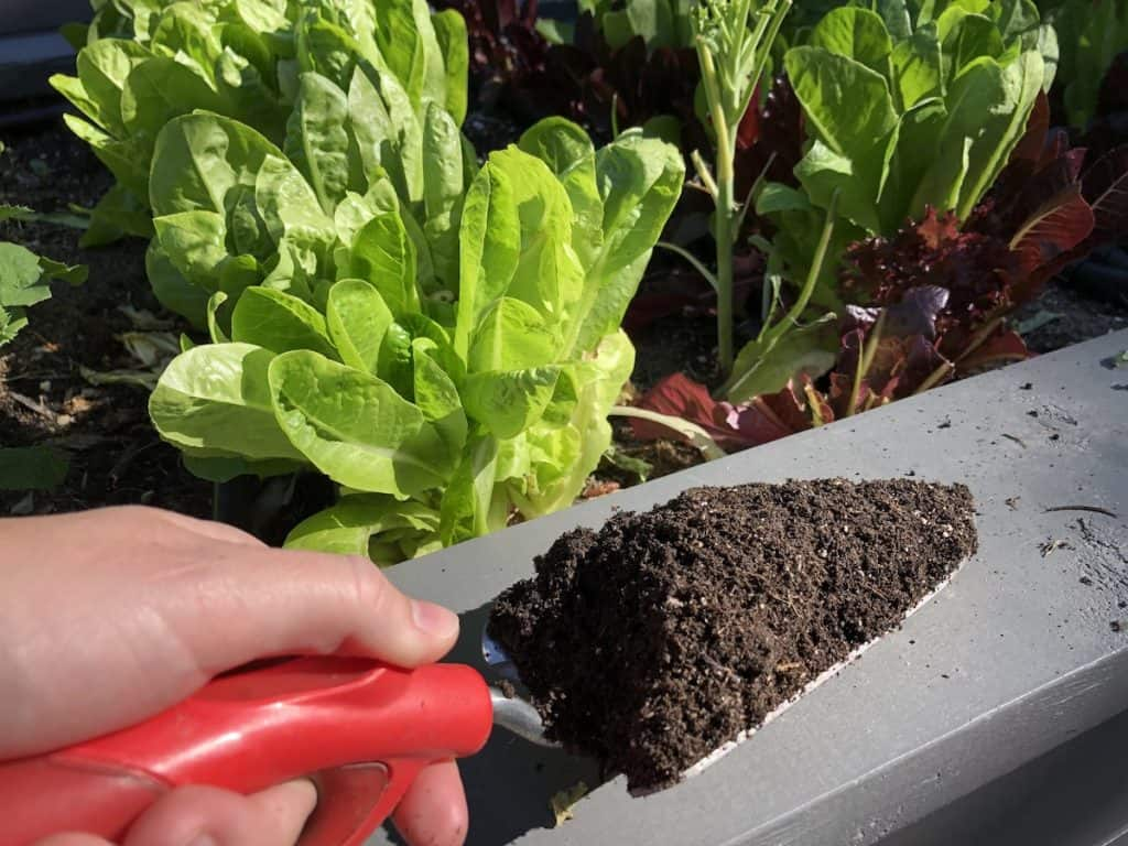Soil mix in a raised bed garden - perlite and homemade compost