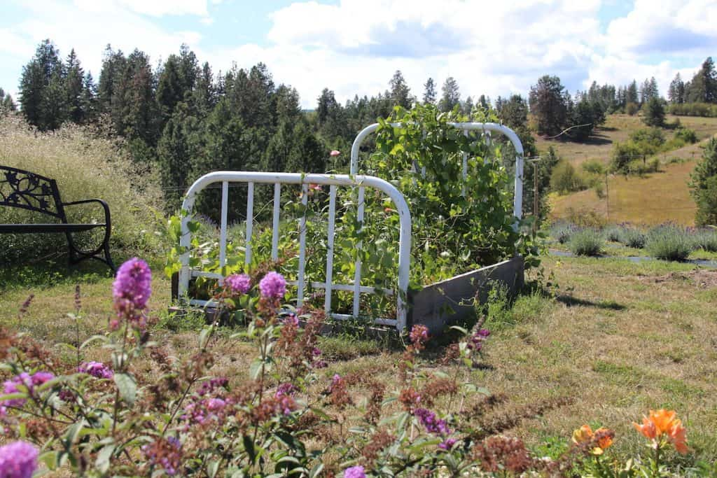 flower bed - bed frame turned into raised garden bed growing flowers