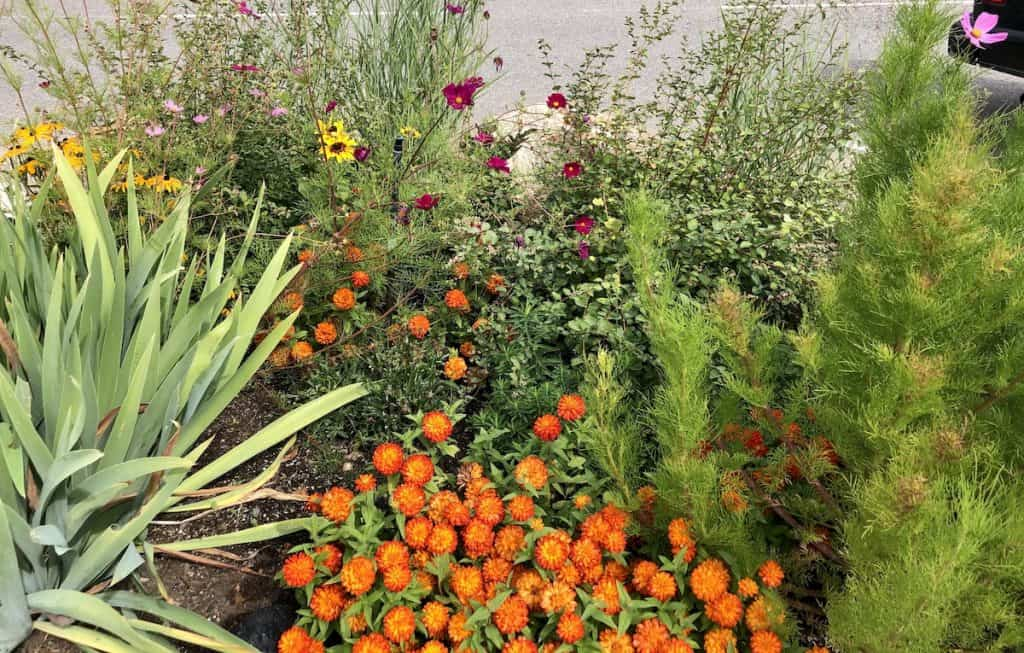 flower bed ideas for a beautiful garden