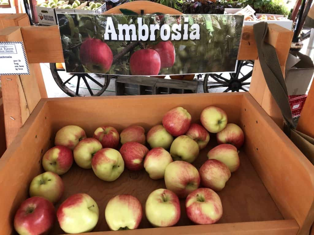 Ambrosia apples at Davison Orchards, Vernon BC
