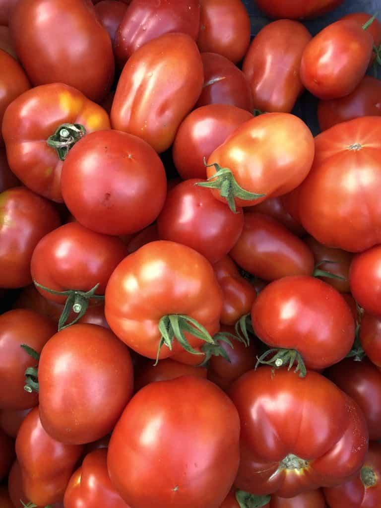 September tomato harvest
