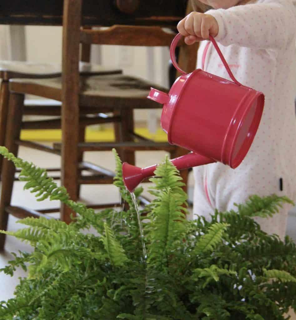 Toddler watering houseplant