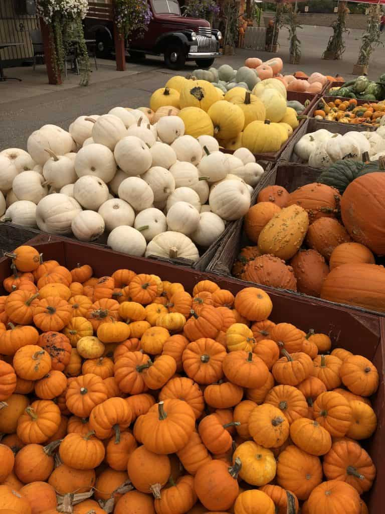 Different types of ornamental pumpkins in large farm bins