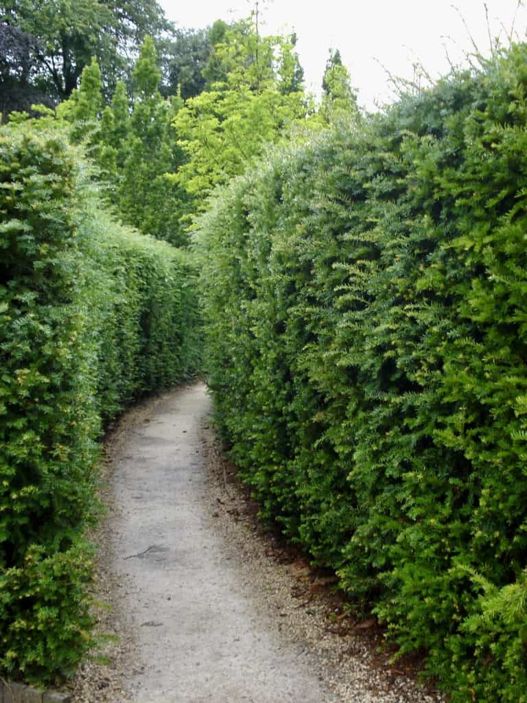 Evergreen Hedges Give Landscaping Structure in Colder Months
