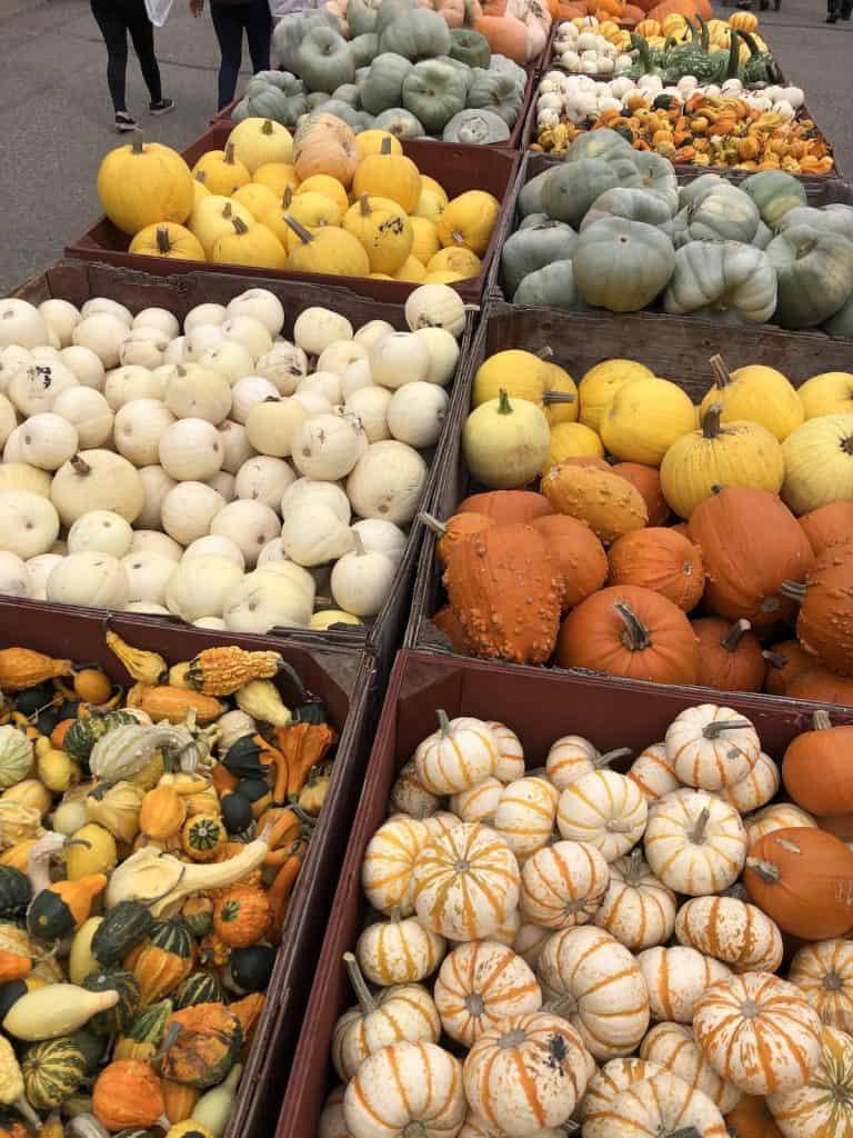 Increase Curb Appeal in the fall with Seasonal Autumn Decor like Heirloom Pumpkins