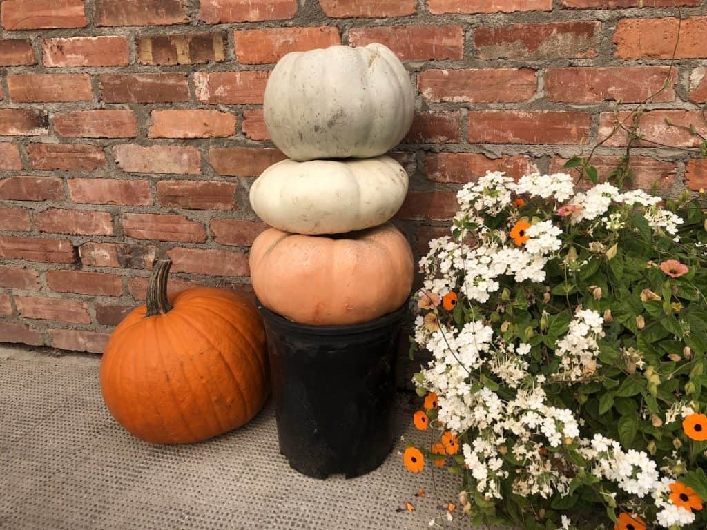 Little stack of ornamental pumpkins in front of brick wall