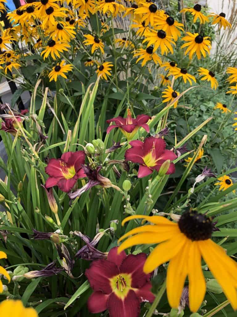 Perennial Border Garden in August