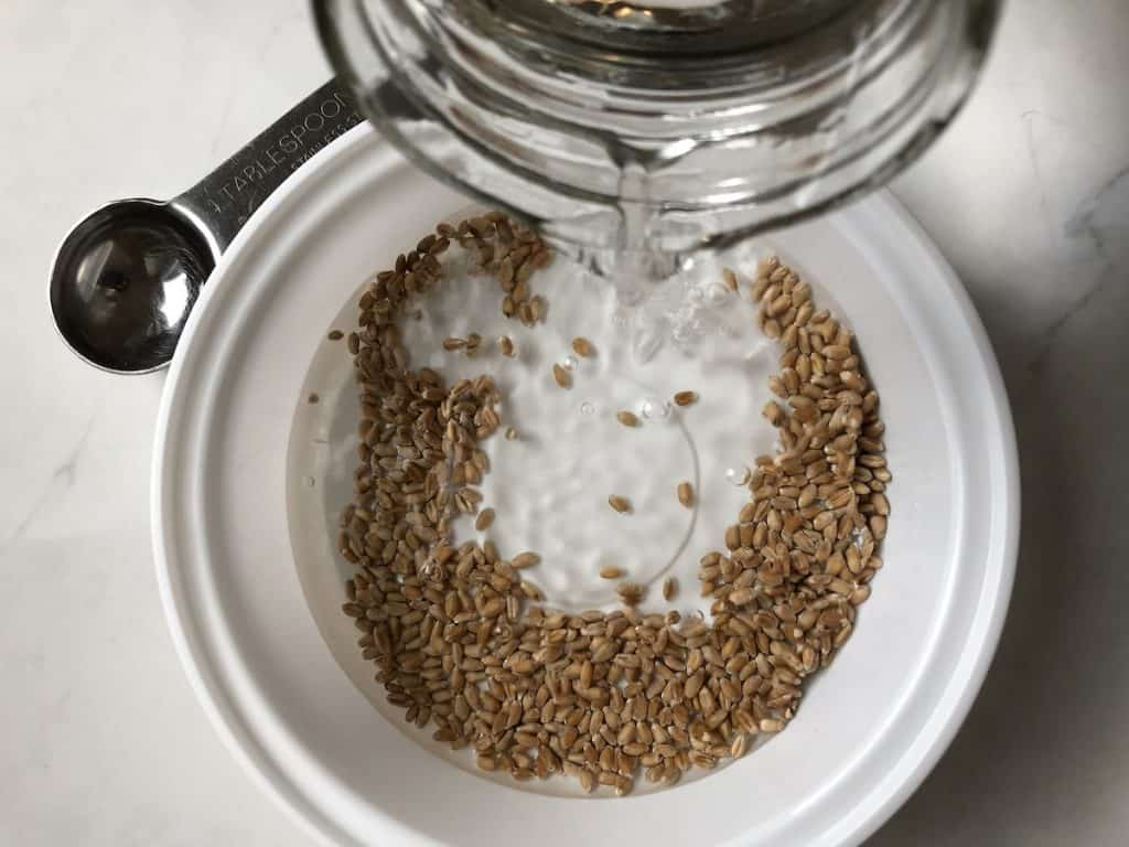 Pouring water into wheat seeds