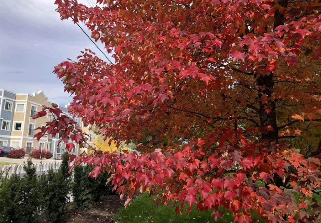 Red Autumn Leaves for Fall Curb Appeal Landscaping Ideas