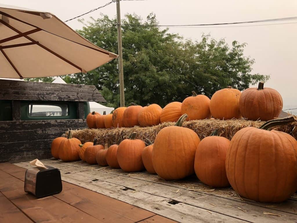 Row of pumpkins on patio with hay bales and umbrella