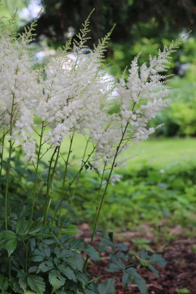 Shade Plants - Ideas for a Shady Garden or Low-Light Landscape