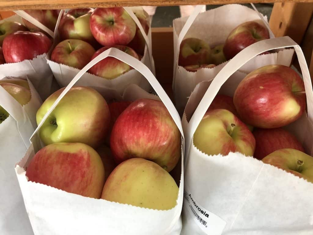 Sweet Ambrosia Fresh Apples in White Paper Bags
