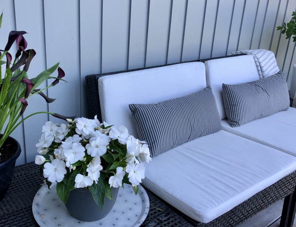White Impatiens on Patio by White Couch