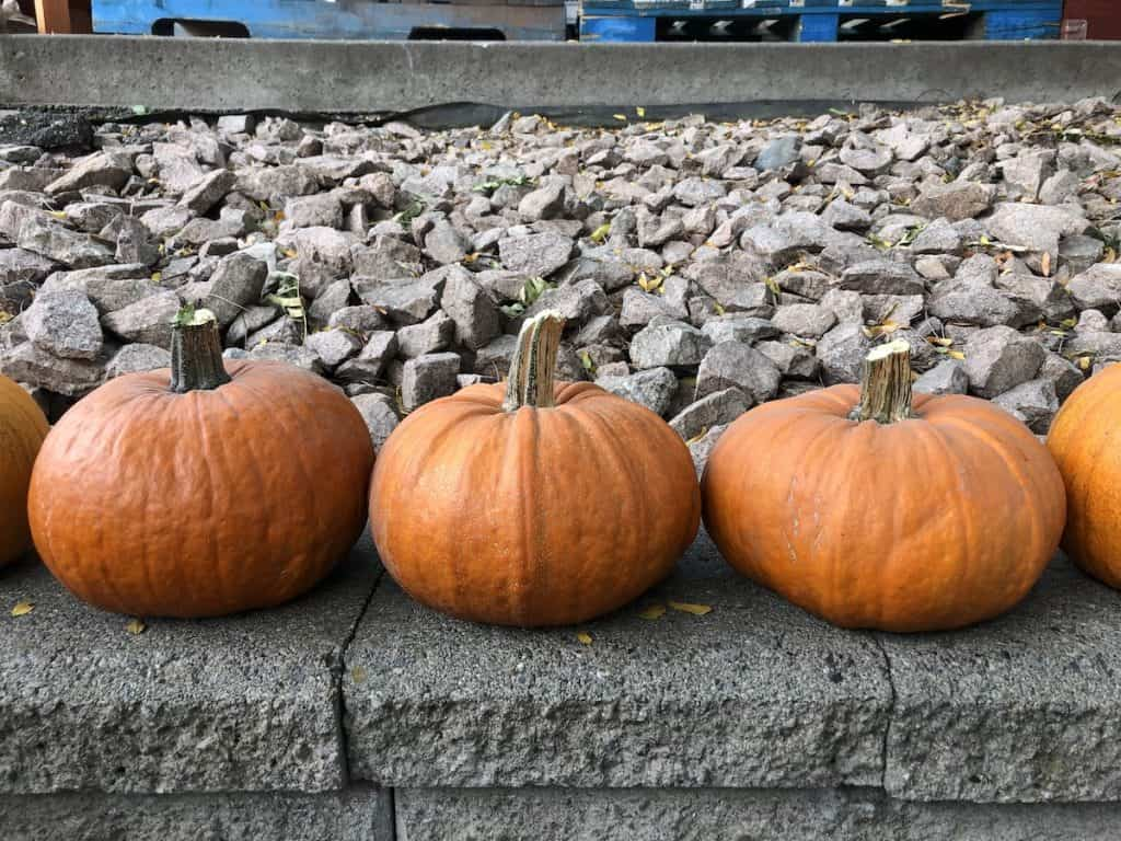 pumpkins along the top of a stone wall