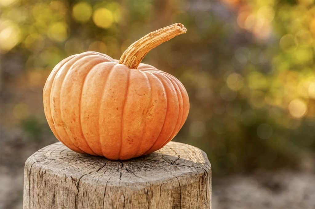 ways to use pumpkin pulp in the fall