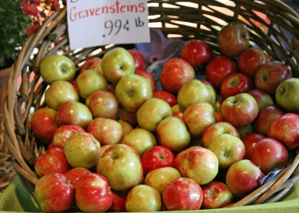 Gravenstein Apples in Basket