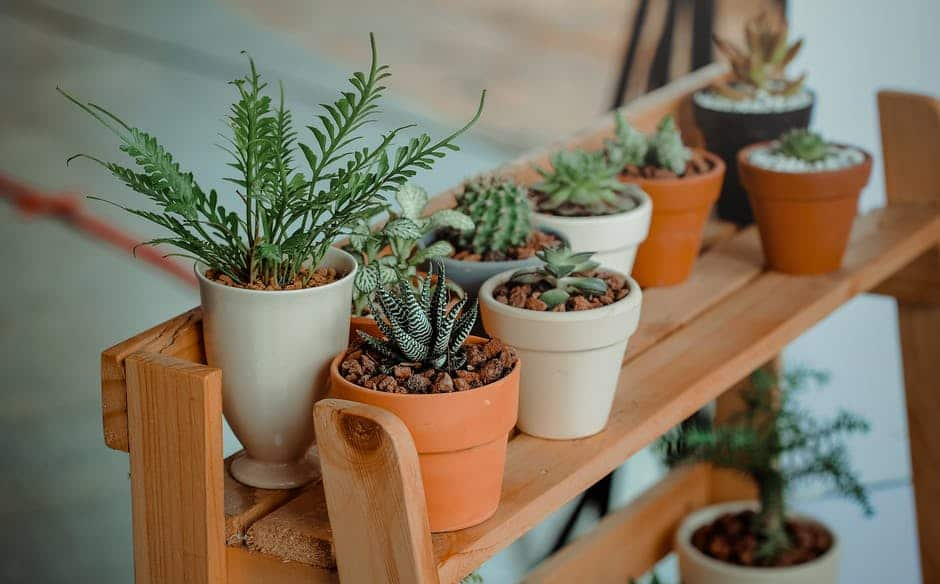 How Often Should I Water My Plants?