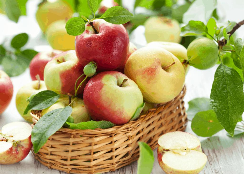 Types of Apples - basket of different varieties