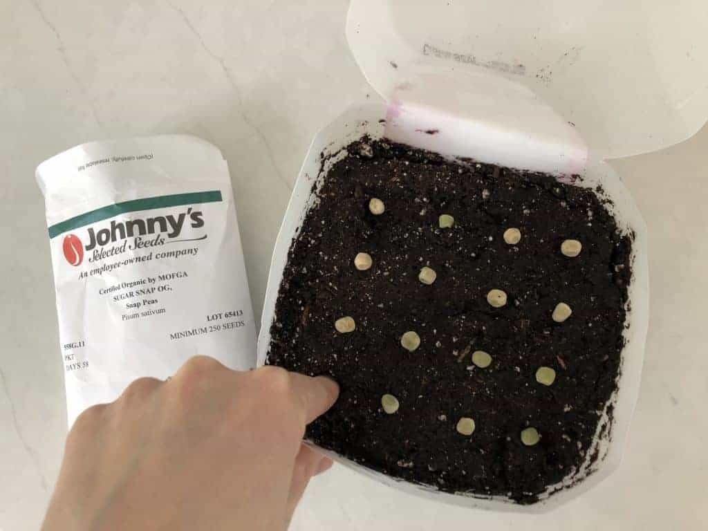 Pushing down seeds into potting mix