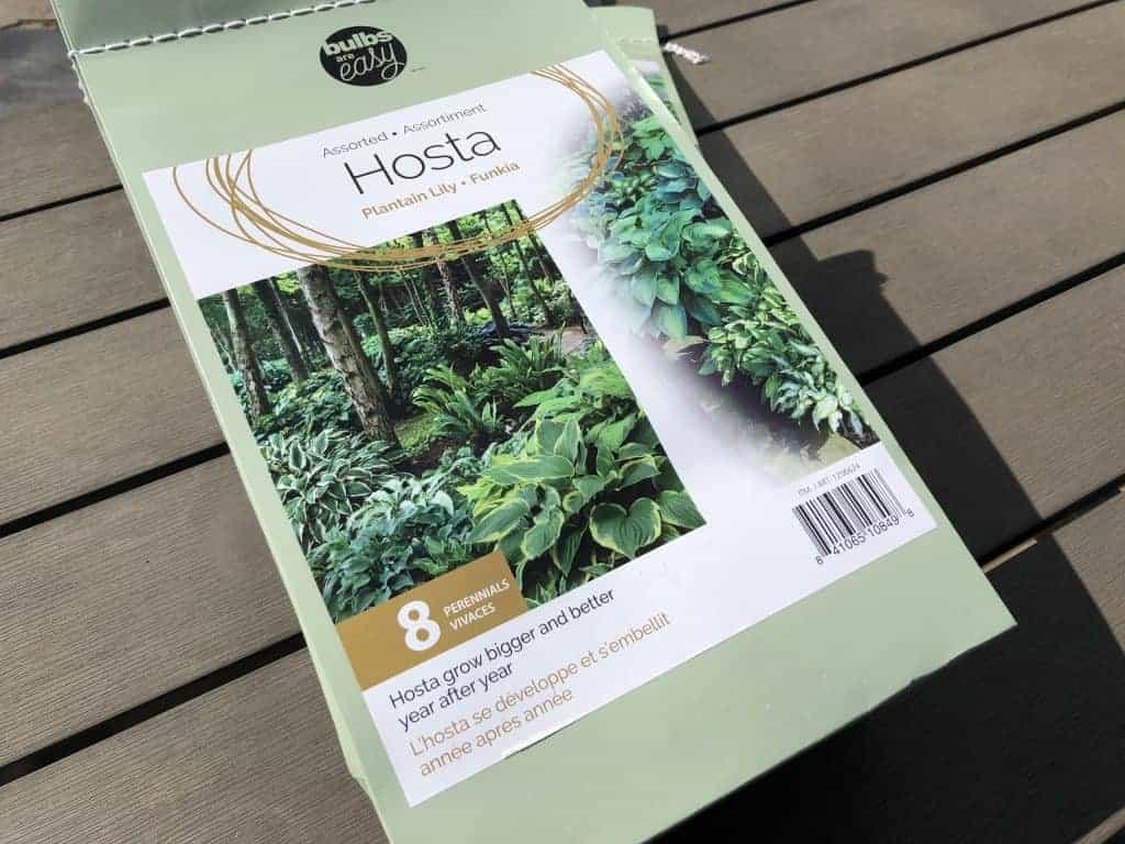 Bag of Bare Root Hosta Bulbs - Bulbs are Easy