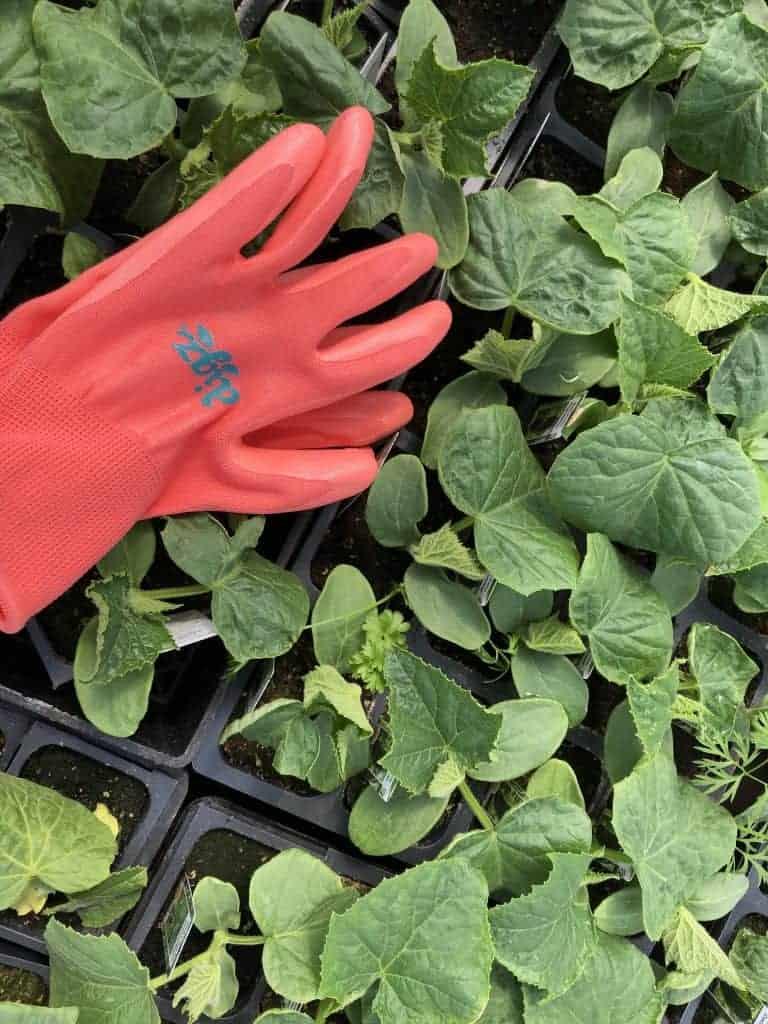 digz gloves - veggie garden