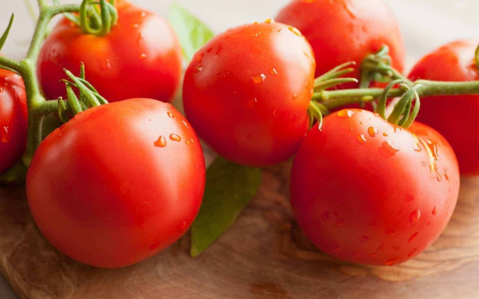 The Early Girl Tomato: A Reliable, Short-Season Favorite Hybrid Variety – Home for the Harvest